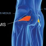 GymnasticBodies addresses all of the muscles in the complex hip and shoulder joints, to assure a full range of motion and greater protection against injury.